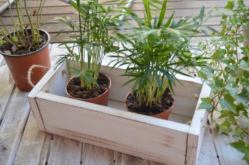 Cajon para las plantas