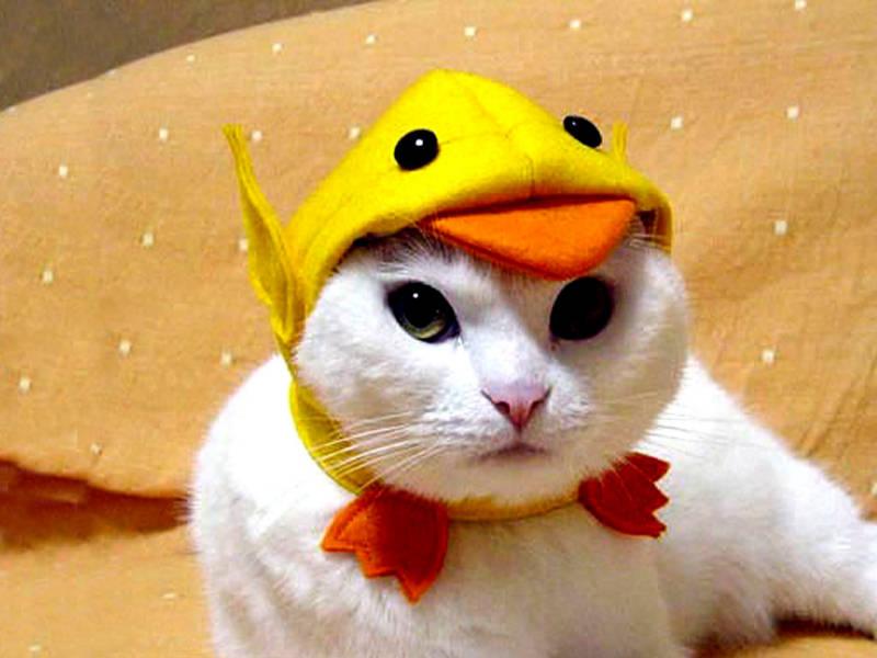 cat-duck