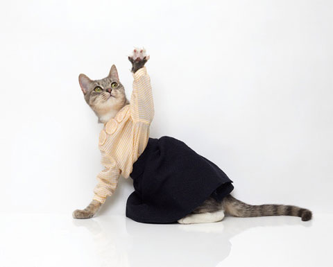 cindy sherman cat