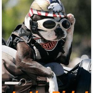 Motorcycle Helmets For Dogs Man's Best Friend