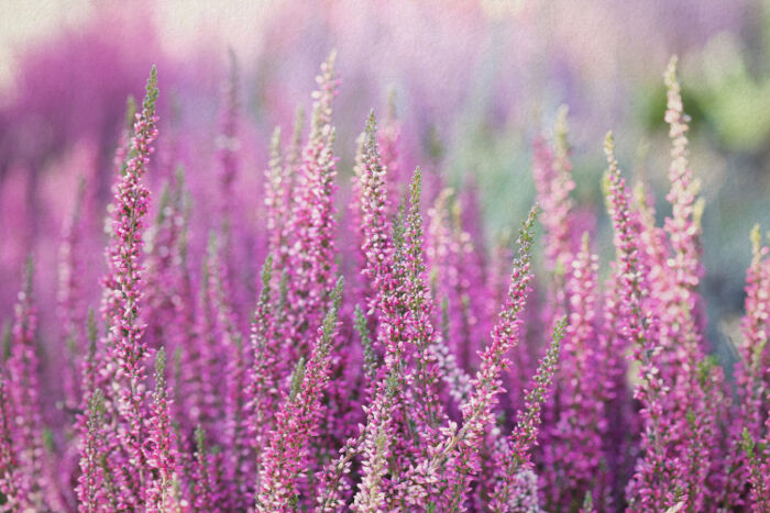 A Flower Called Heather: Grief in the Workplace