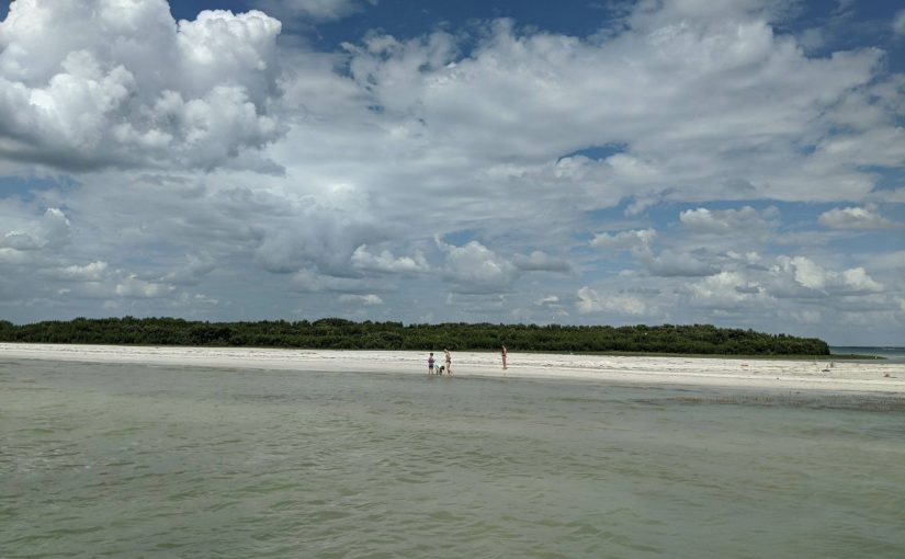 Florida Daydreaming: How to survive and make a difference in 2020: Be a Sandbar