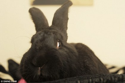 rabbit that stopped burglar