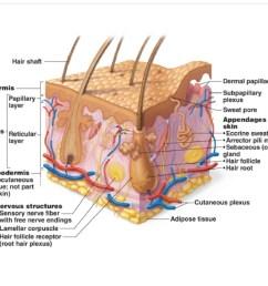 skin diagram practice [ 1035 x 800 Pixel ]
