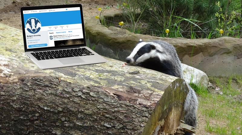 Badgers Crossing joins Twitter