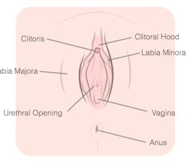 How To Masturbate Vagina Labeled