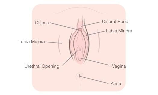 How To Masturbate Vagina Labeled
