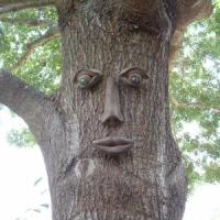 Dude, Your Tree Just Winked at Me