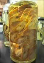jar of fish