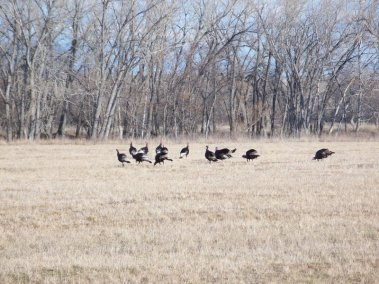 wild-turkey-hunting_2697679436_l