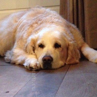 Mag ik ff zeuren!! Over mensen die mijn hond te streng bekritiseren: BAH!