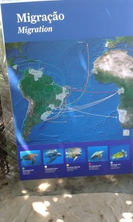 I had no idea that turtles travelled over the ocean