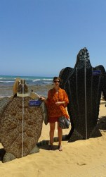 The leatherback turtle - up to 2m long and 900kg