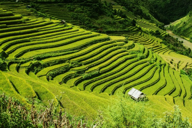 rice-terraces-276017_1920