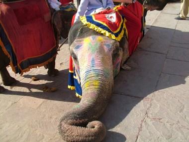 I'm a pretty elephant