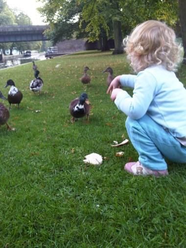 Ducks! More Bread!