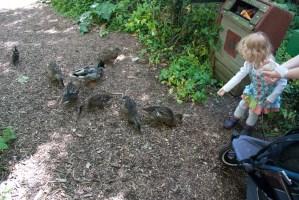 Éowyn feeding the ducks