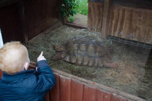 Tortoise!