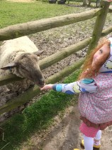 Feeding the sheep!