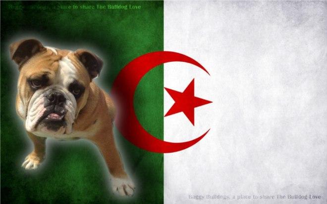 algeria_vlag1