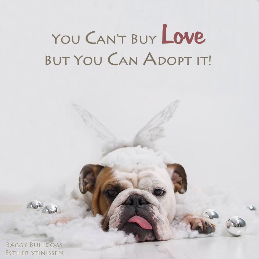 adopt-facebook.com-esther.stinissen.jpg