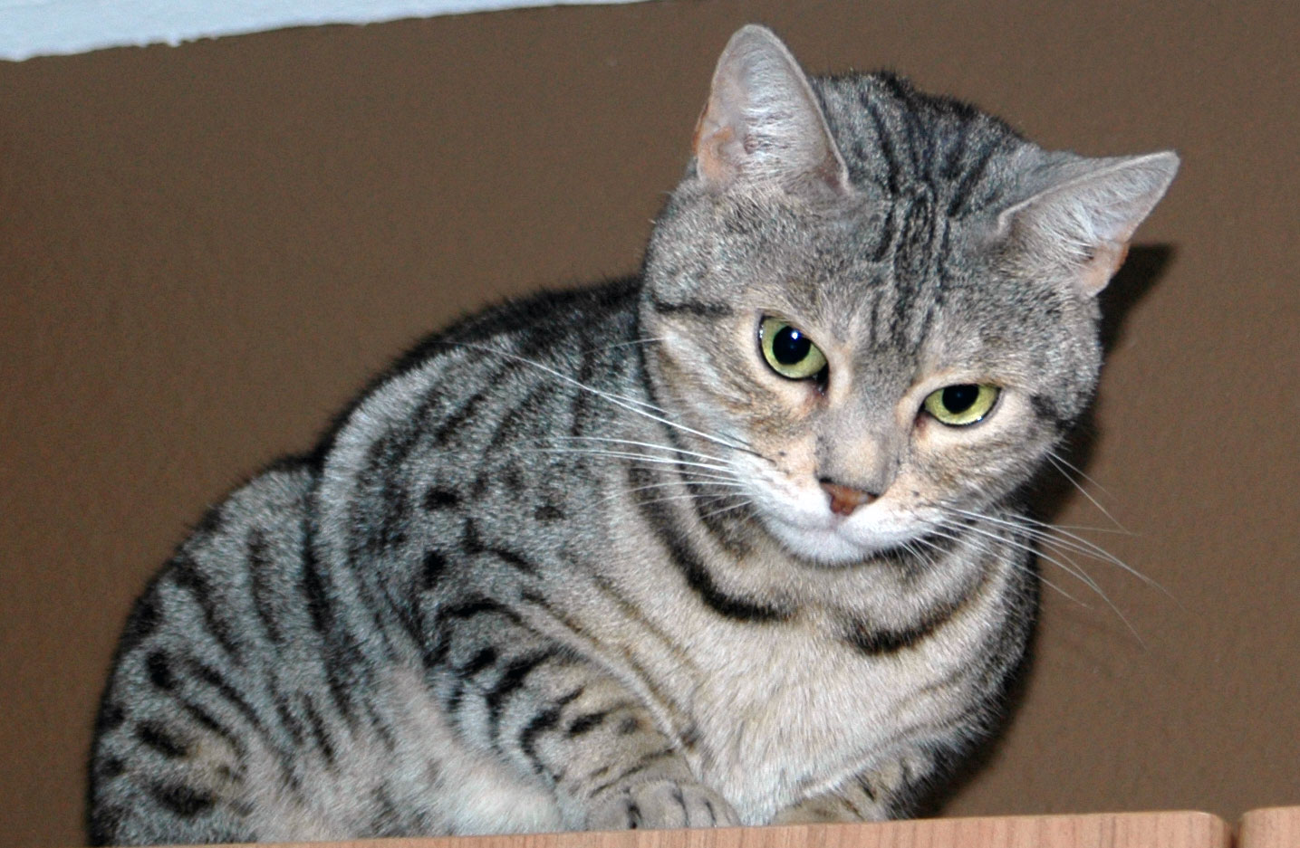 Bagheera The Diabetic Cat's Furiend Jacey