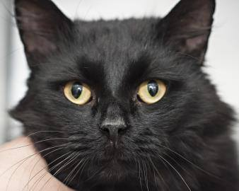 Anderson Is Hoping For a Happy Cat Adoption Story