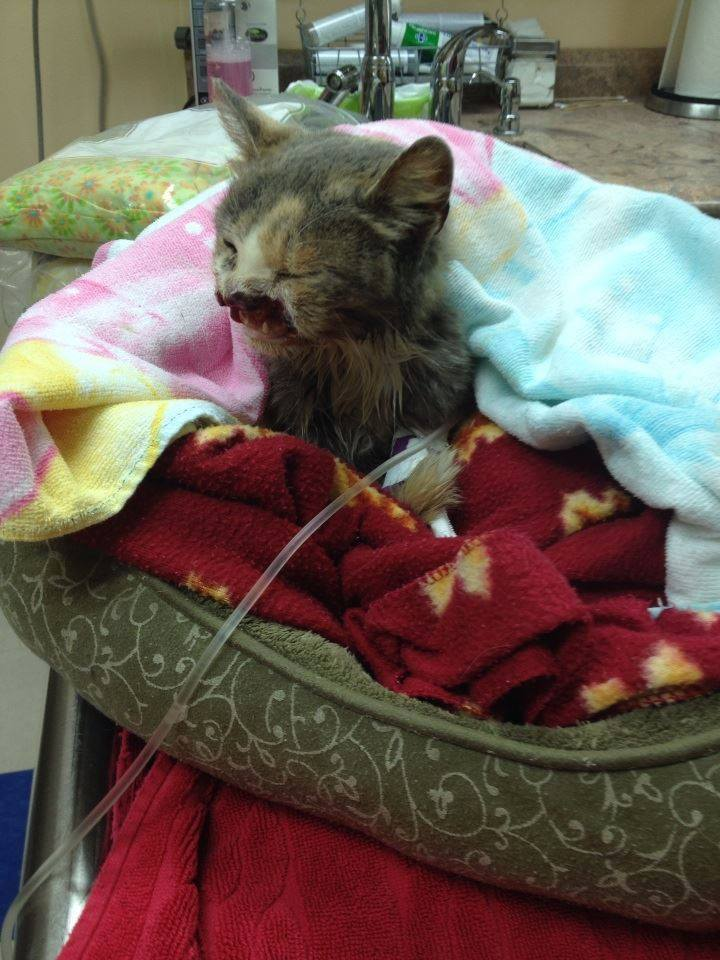 Cat Rescue Group Cat Chance Helps Cove Angel