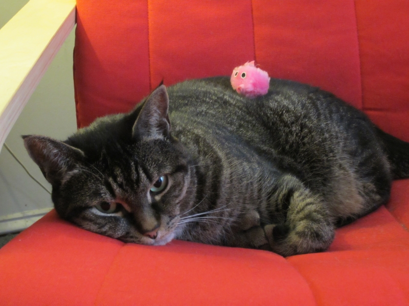 Yonah's Cat Rescue Story Takes her from Trash to Happy Home