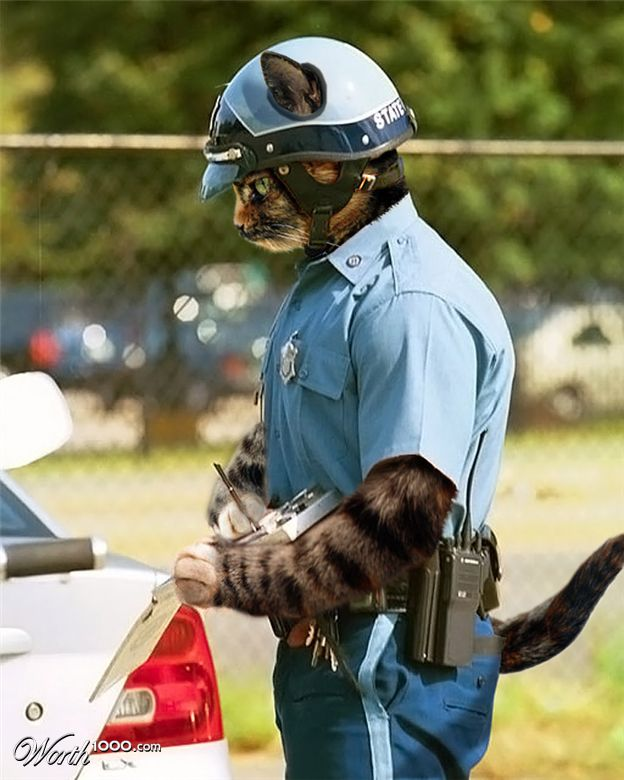 This Feline Officer Will Not Tolerate Animal Abuse