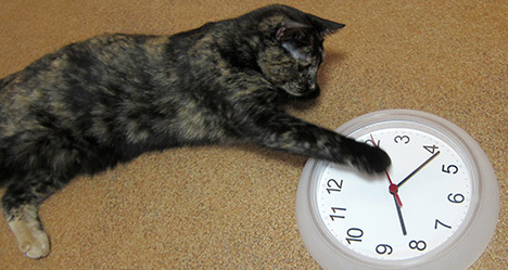 Cat Helping With Changing Clock