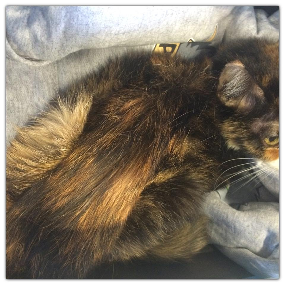 Help Complete Jedi and Padme's cat rescue
