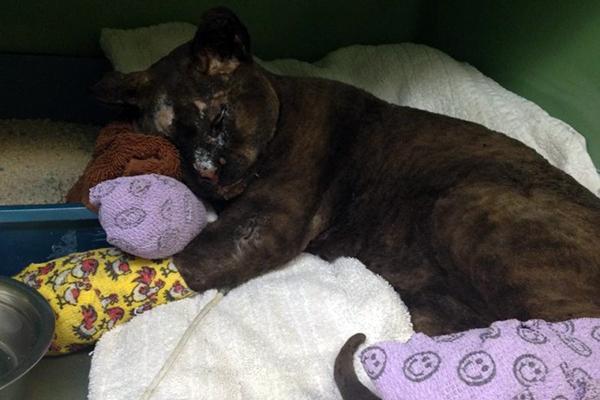 Memow's Cat Rescue is Inspiring