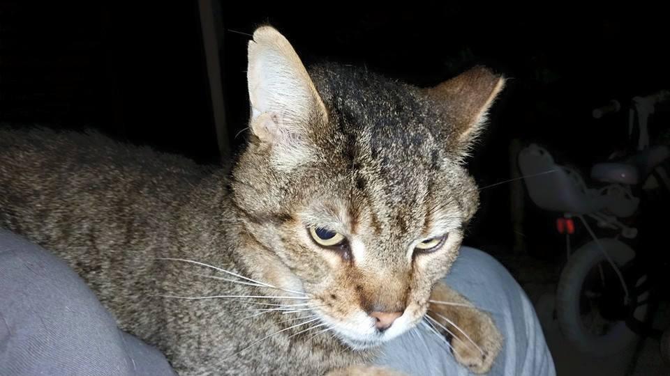 Community Cat's Oscar Has Left Us