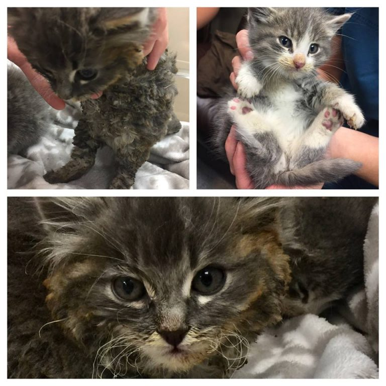 Pyro and Manni are Recovering at Cat's Cradle Cat Rescue