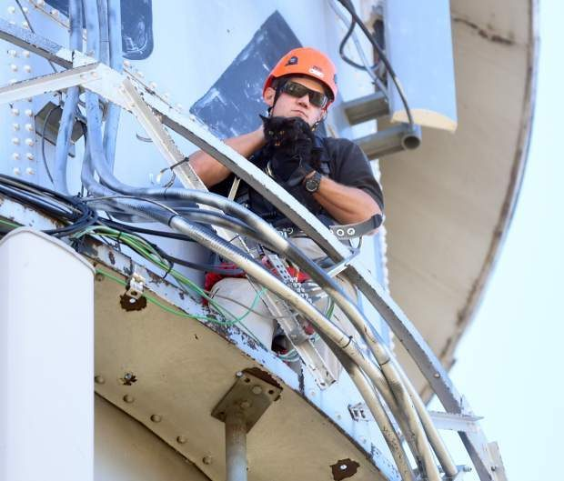A Human Carrying Out a Cat Rescue 85 Feet in the Air