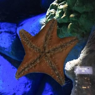 Patrick Stars ★