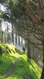 the path to the rustico
