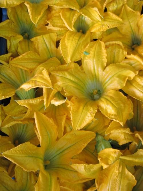 IMG_0764pumpkin flowers