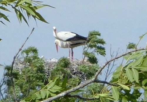Camargue wildlife