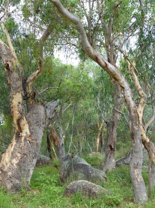 Australian bush