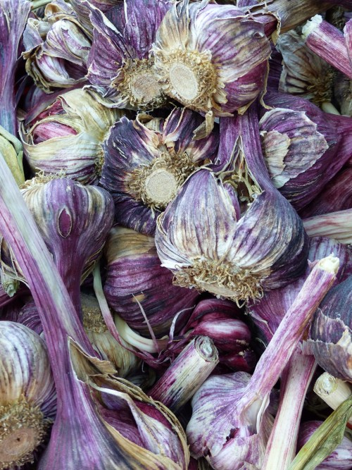 Arles food market