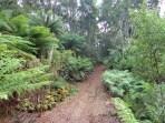 Tasmanian rain forest