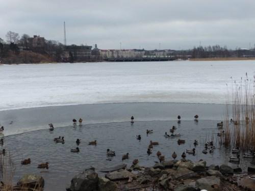 Ducks Helsinki