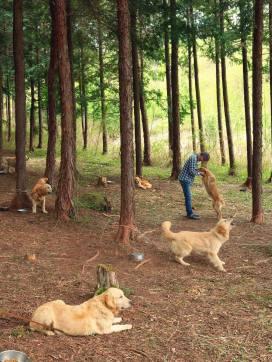 yatsugatake dog farm_06