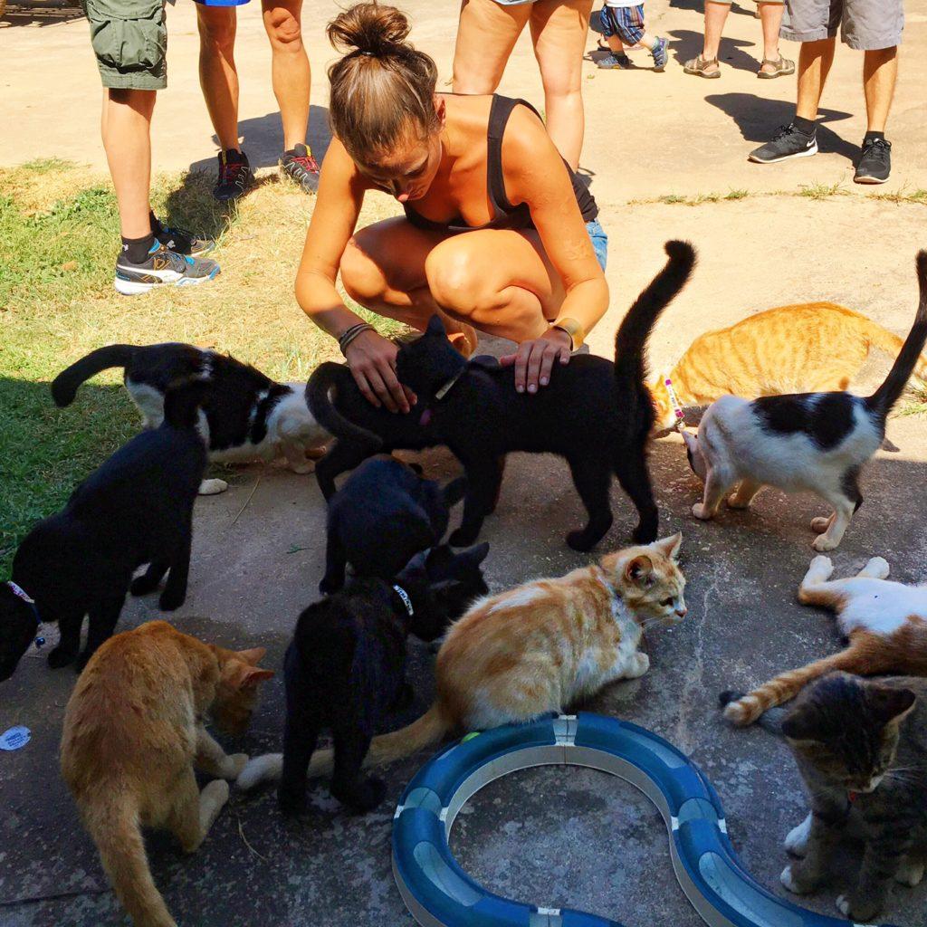 Thailand, Koh Lanta, Animal Welfare