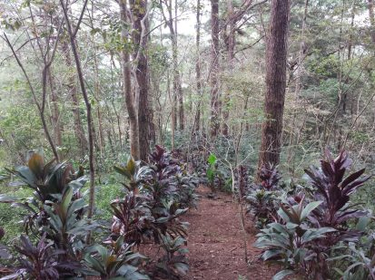 winaca eco cultural village trail 5