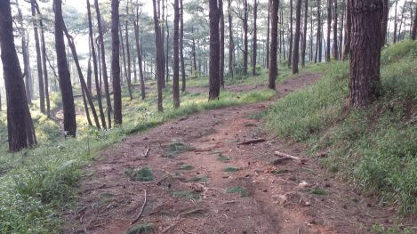 yellow trail camp john hay baguio (29)