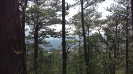yellow trail camp john hay baguio (3)