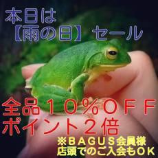 BAGUSの雨の日